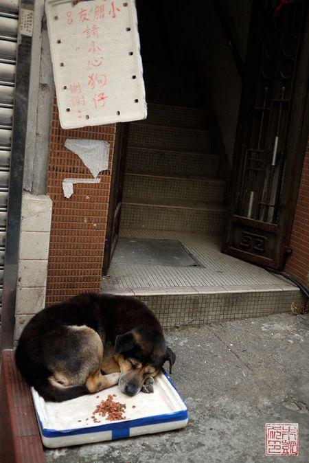 Dogdoorway2